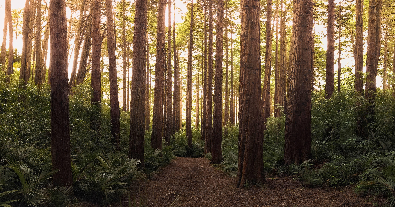 Waldlichtung schöner Trail